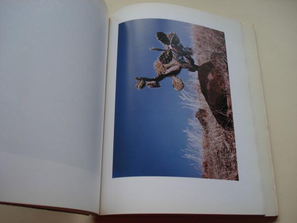 POESÍA. Revista ilustrada de información poética. Nº 33