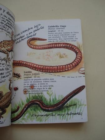 Lagartos y lagartijas. Cuadernos de campo, nº 20